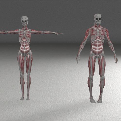 Ubicaciones del cuerpo donde transita el colágeno