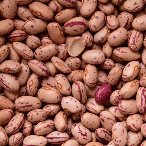 Frijol, un alimento dentro del grupo de las leguminosas