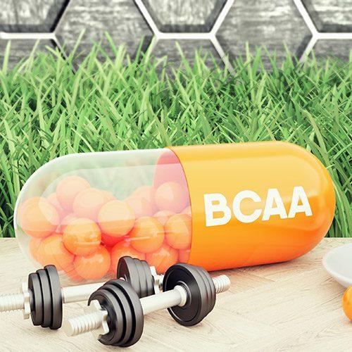 BCAA amino ácidos